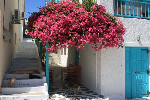 Ruas e casas floridas